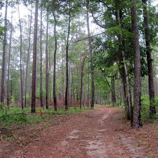 spring grove trail at San Felasco Hammock Preserve State Park